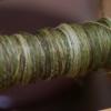 野生のカラムシの糸撚りかけ